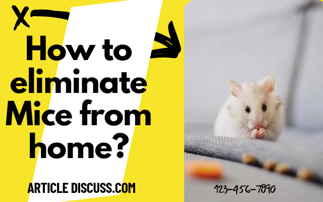 How to eliminate mice from Home