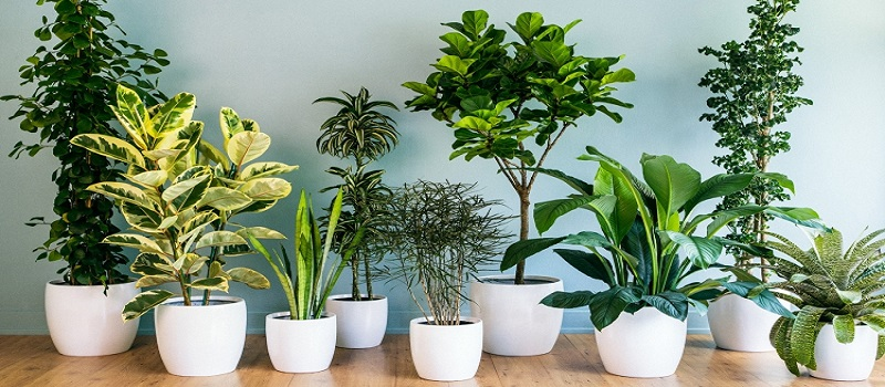 6 Summers Plants To Ornament Your Garden With